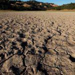 La ola de calor en EEUU golpea a la agricultura y a las especies autóctonas